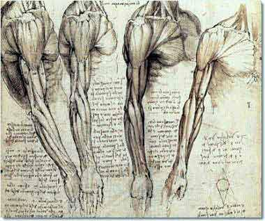 Human Anatomy Drawing